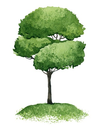 Single green tree isolated on white background. Watercolor illustration
