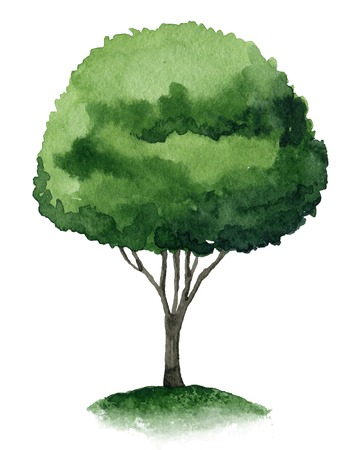 Single green tree isolated on white background. Watercolor illustration Stock Illustration - 26624825