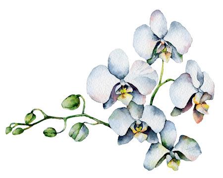 Enkele orchidee die op een witte achtergrond Schilderen