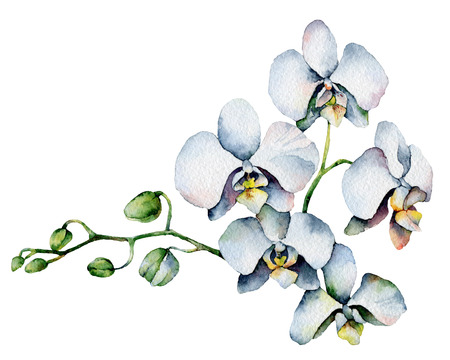 Single orchid isolated on white background  Watercolor Painting