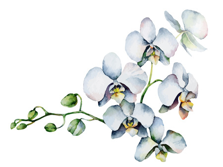 Single orchid isolated on white background. Vector illustration