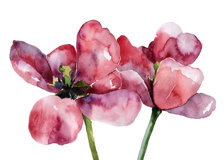 Tulipes pourpres isolé sur fond blanc. Aquarelle Banque d'images - 29297890