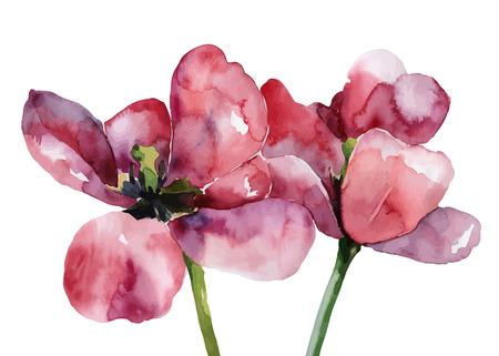 Purple tulips isolated on white background.  Ilustração