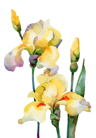 Yellow flowers irises isolated on white background. Vector illustration Ilustracja