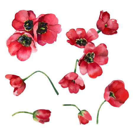 Set of isolated elements of red flowers tulips. Vector illustration Illustration