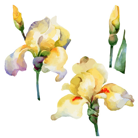 hand painted: Set of isolated elements of yellow flowers irises. Vector illustration