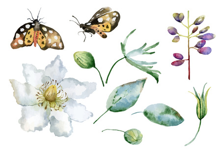Set of isolated elements of  flowers, leaves and butterflies. Vector illustration Vector