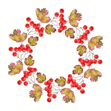 guelder rose: Bright wreath of branches of viburnum with leaves and berries. Vector illustration Illustration