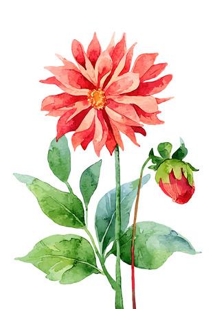 dahlia: Dahlia