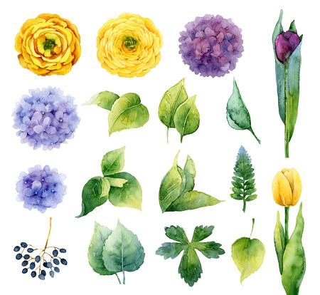 flor violeta: Conjunto de elementos aislados de flores y hojas. Ilustración de la acuarela