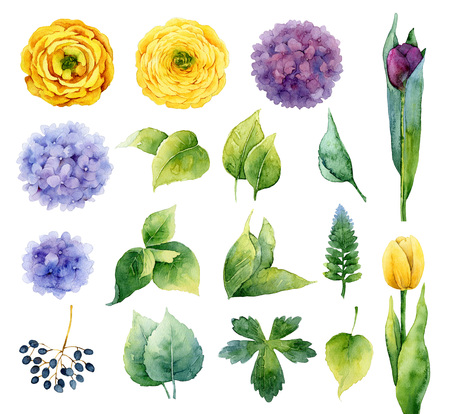 violet flowers: Set of isolated elements of flowers and leaves. Watercolor illustration