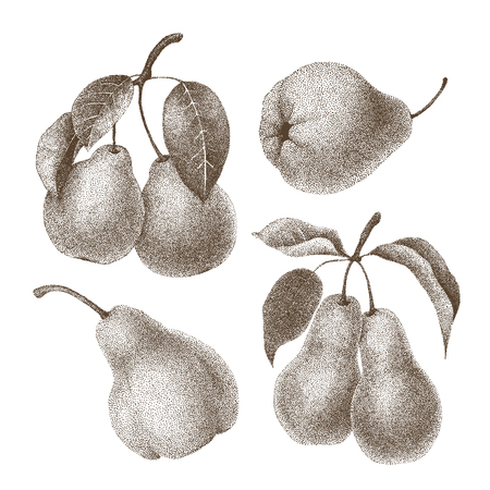 horticultural: Set of hand-painted in style pointillism pears. Vector illustration