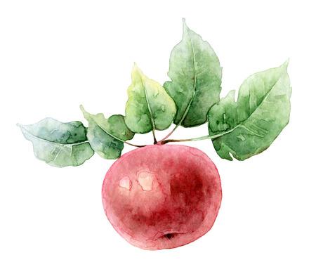 Single heldere rode waterverf appel op een tak met bladeren. illustratie van de waterverf Stockfoto