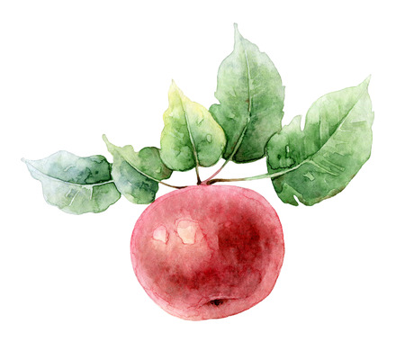 Single bright red watercolor apple on a branch with leaves. Watercolor illustration Stock Photo