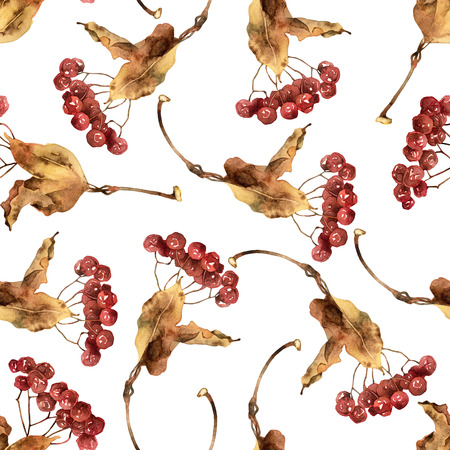 viburnum: Seamless pattern with viburnum berries. Watercolor illustration