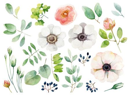 Set van florale elementen op een witte achtergrond. illustratie van de waterverf Stockfoto