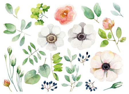Set of floral elements isolated on white background. Watercolor illustration