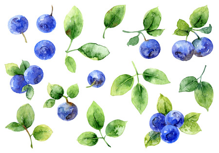blue berry: Bilberry on white background. Set of elements. Watercolor illustration