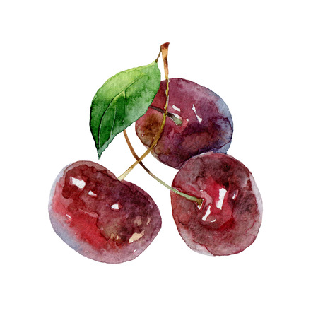 three leaf: Three cherry berries with green leaf isolated on white background. Watercolor illustration