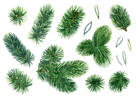 tree decorations: Bright green branches of spruce. Set of elements. Watercolor illustration Stock Photo