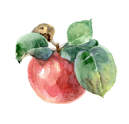 nature one painted: Single bright red watercolor apple with leaves. Sketch. Watercolor illustration