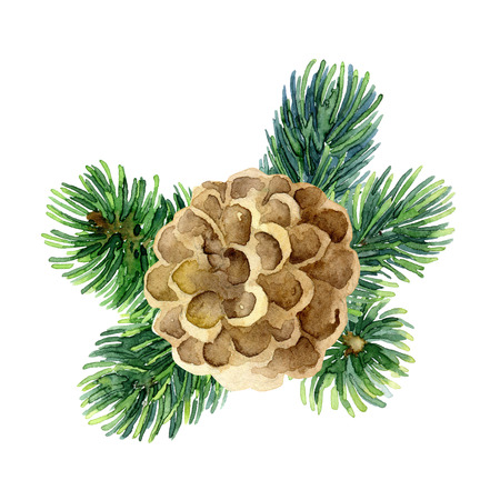 abeto: Christmas design element with fir branches and cone. Watercolor illustration
