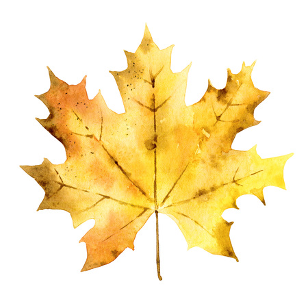 Autumn maple leaf isolated on white background. Watercolor illustration Stock Photo