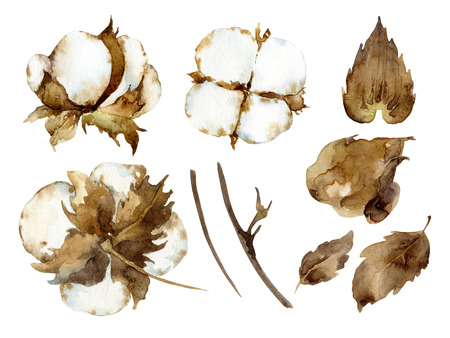 boll: White cotton flowers. Set of design elements. Watercolor illustration