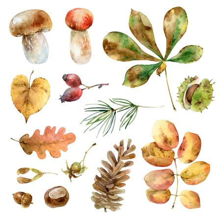 水彩の秋セット