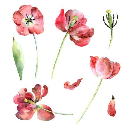 Ensemble de tulipes rouges Banque d'images - 73417770