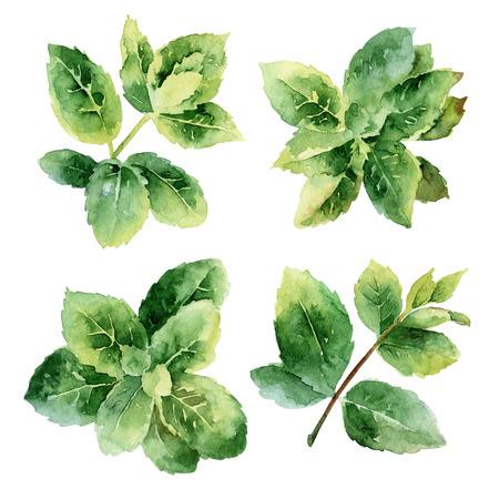 그린 민트 잎