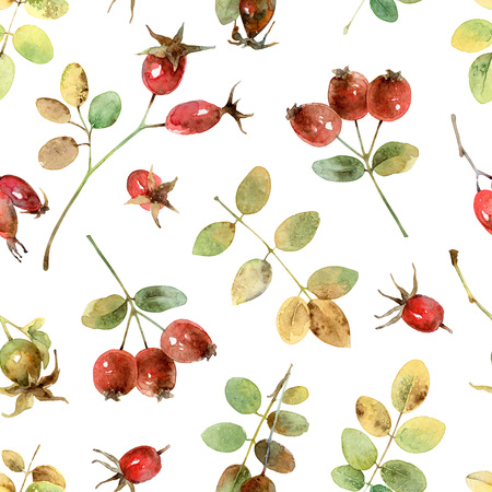 immature: Seamless pattern with rosehip