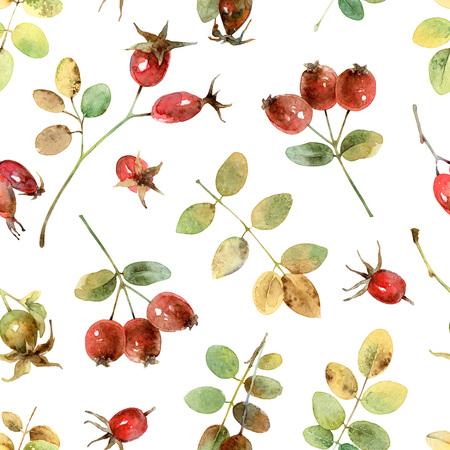 eglantine: Seamless pattern with rosehip