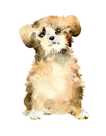 Watercolor cute puppy on white background