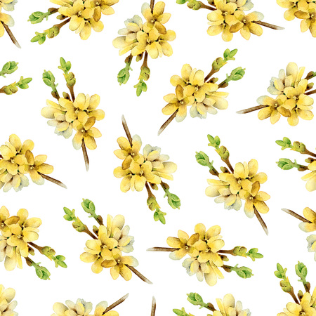 forsythia: Pattern with blooming yellow twigs Forsythia Stock Photo