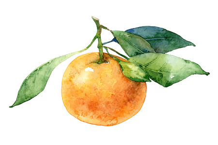 Single mandarin with leaves