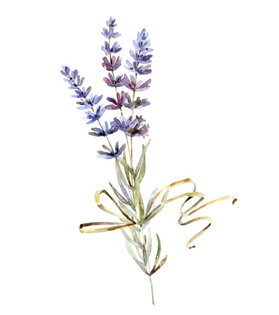 Lavender flowers on white background