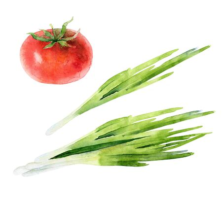 Watercolor set of fresh vegetables. Green onions and ripe tomato. Watercolor illustration