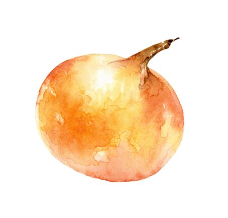 Watercolor single onion on white background