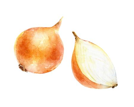 Watercolor onion on white background Stockfoto