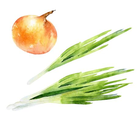 Watercolor set of green and ripe onions Stockfoto