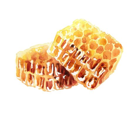 Honeycombs on white background. Watercolor illustration Banque d'images