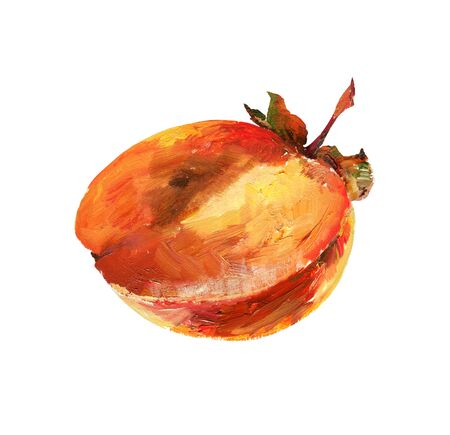 Persimmon half on white background. Oil painting