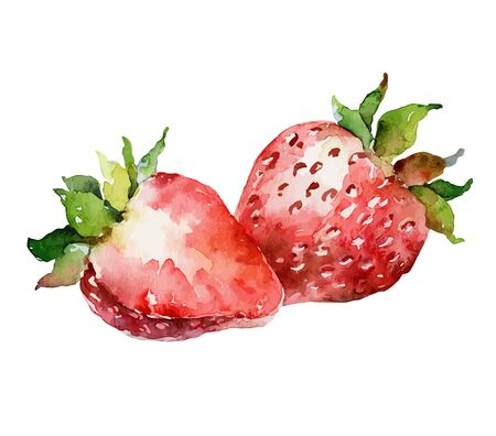 Watercolor vector strawberry on white background