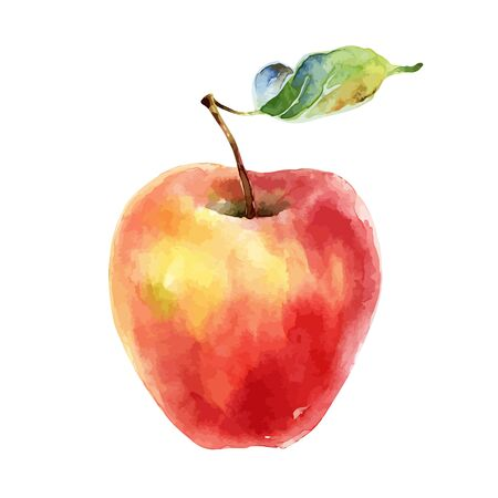 Watercolor red yellow apple on white background