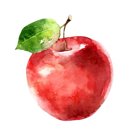 Ripe red apple isolated on white background. Watercolor vector illustration