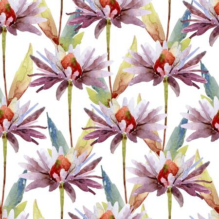 seamless pattern with echinacea purpurea flowers Banque d'images