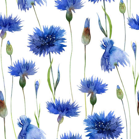 Watercolor bright seamless pattern with blue cornflowers Banque d'images