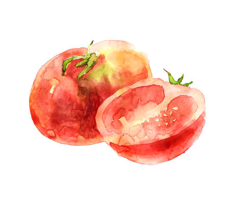 Watercolor tomatoes on white background
