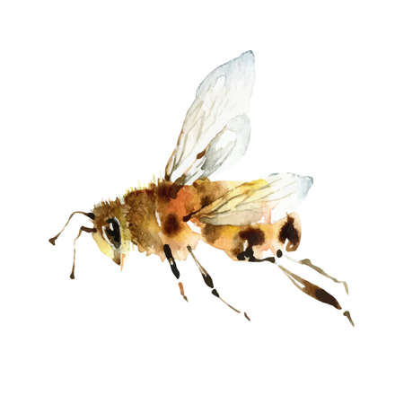 Watercolor cute bee on white background Illustration
